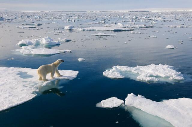 Животные и птицы Северного полюса - фото, названия, описание
