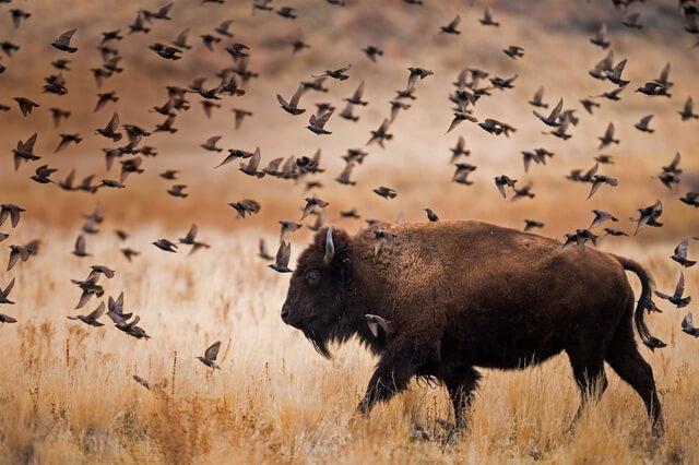 Животные штата Юта - фото, названия, описание