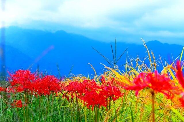 Фестивали цветов в Японии - ТОП-7 лучших мест страны для любования красочным цветением