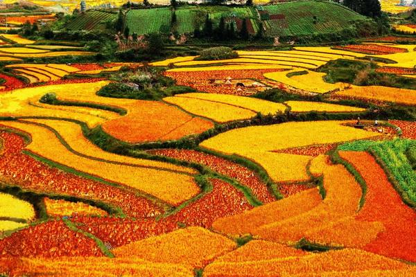 Интересные места Китая - цветные поля Дончуань