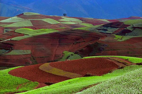Разноцветные китайские поля