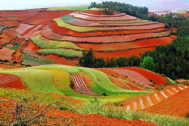 Цветные поля Дончуань в Китае