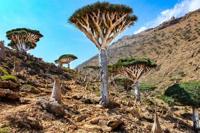 Уникальная флора и фауна острова Сокотра - основные растения и животные
