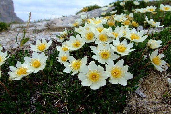 Флора Арктики - краткое описание