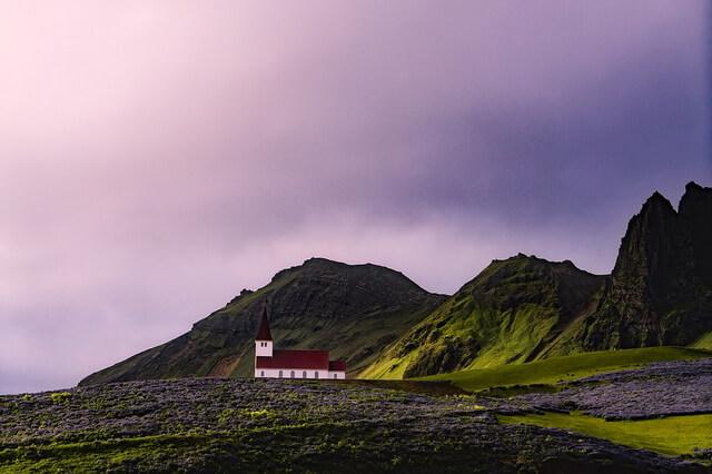 Растения Исландии - фото, название, описание