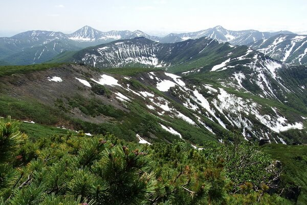 Хвойные леса Камчатки