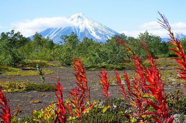 Растения Камчатки - фото, названия, описание