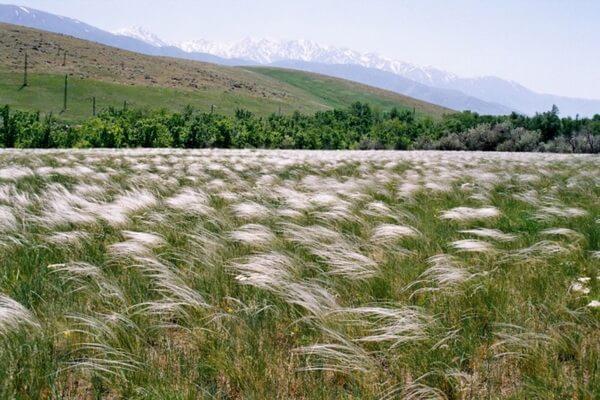 Растительный мир Казахстана - общая характеристика