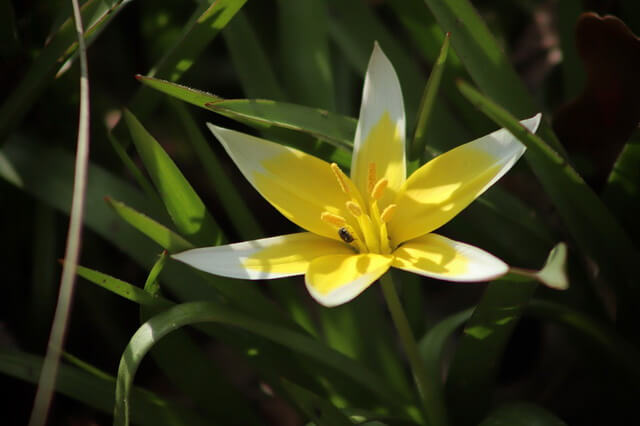 Флора Казахстана - основные растения с фото и описанием