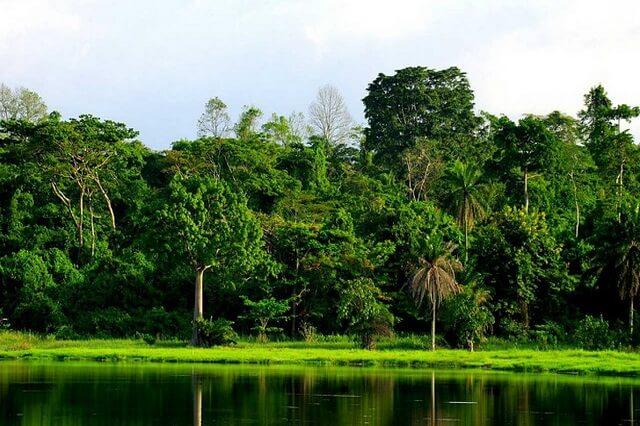 Растения Нигерии - фото, названия, описание