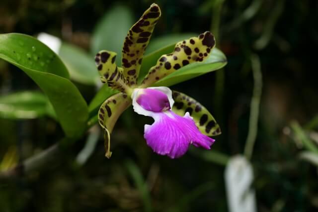Растения Бразилии - основная флора с фото и описанием