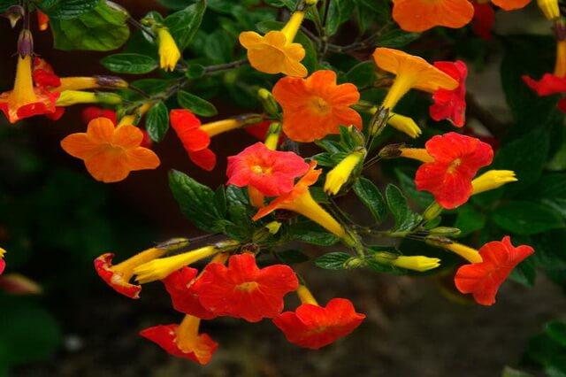 Растения Колумбии - основные виды местной флоры