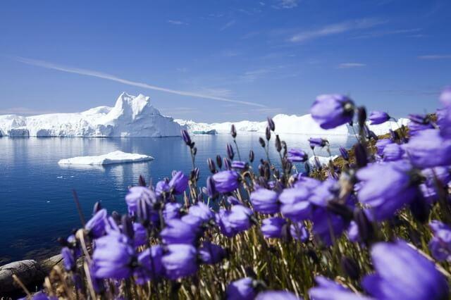 Флора Гренландии - основные растения