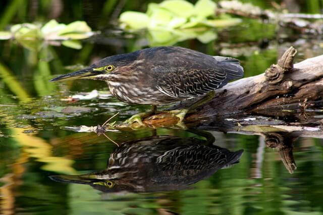Национальные парки Флориды - популярные заповедники штата