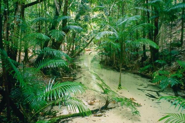 Мангровые леса острова Фрейзер