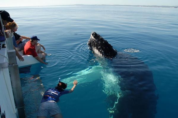 Плавание с китами на острове Фрейзер