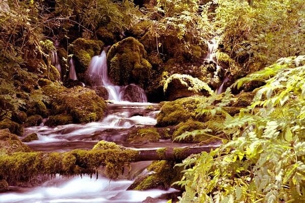 Горы в Сербии с фото и описанием - Национальный парк Тара