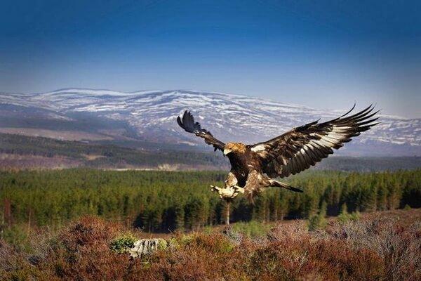 Птицы в горах Шотландии
