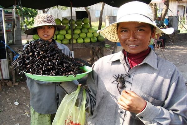 Жареные пауки – основной деликатес Камбоджи