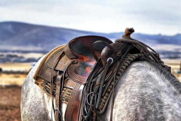 Конные походы в горах - что нужно знать туристам-новичкам