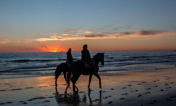 Конные прогулки в Крыму у моря