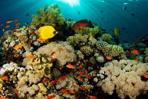 Коралловый треугольник - флора и фауна