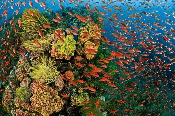 Коралловый треугольник - экологические угрозы