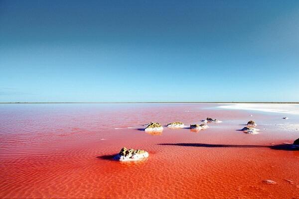 Когда лучше ехать к Кояшскому розовому озеру в Крыму