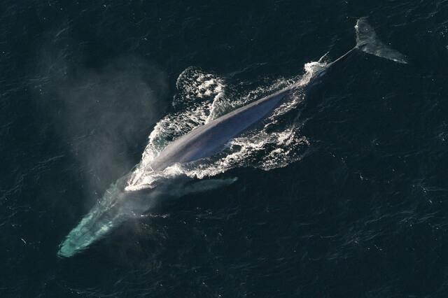 Самые большие животные в океане - фото, названия, описание