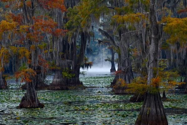 Осенние кипарисы озера Каддо - красивые фото