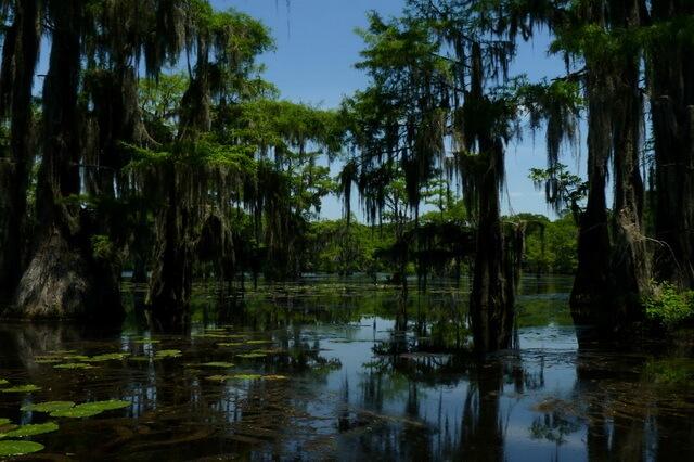 Озеро Каддо в Техасе - фото, история, флора, фауна, интересные факты, развлечения