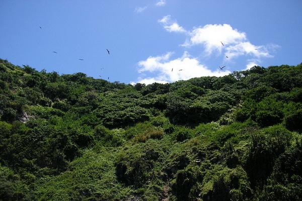 Птицы лесного заповедника острова Тобаго