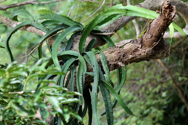 Уникальная флора острова Тобаго