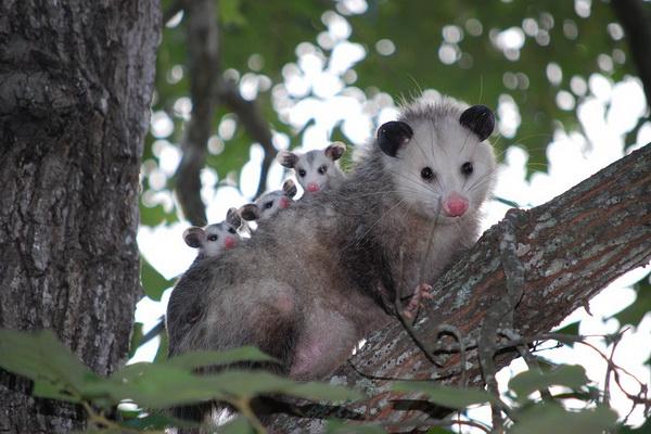 Уникальная фауна острова Тобаго