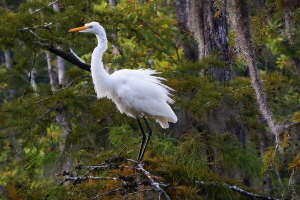 Луизианские болота - фото