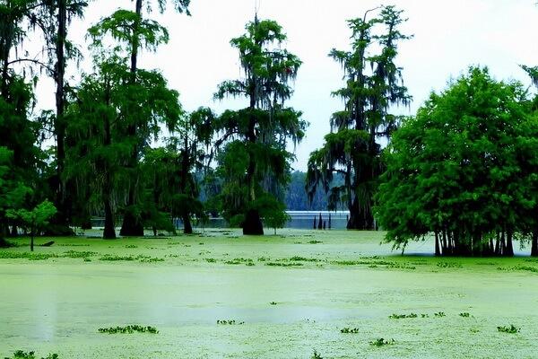 Луизианские болота, США