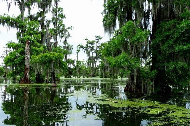 Мистические луизианские болота Манчак в США