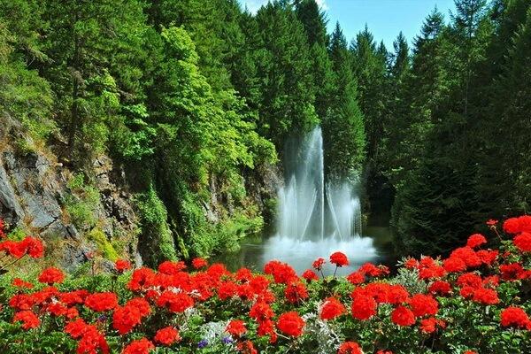 Живописные сады Бутчартов в Канаде - красивые фото