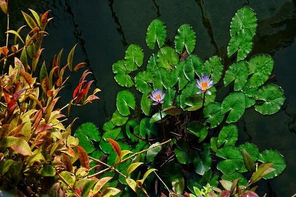 Королевские ботанические сады Кью, Великобритания - красивые фото
