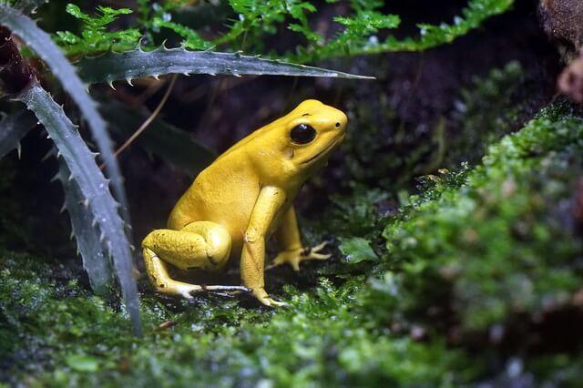 Фауна Южной Америки - самые опасные животные Амазонки