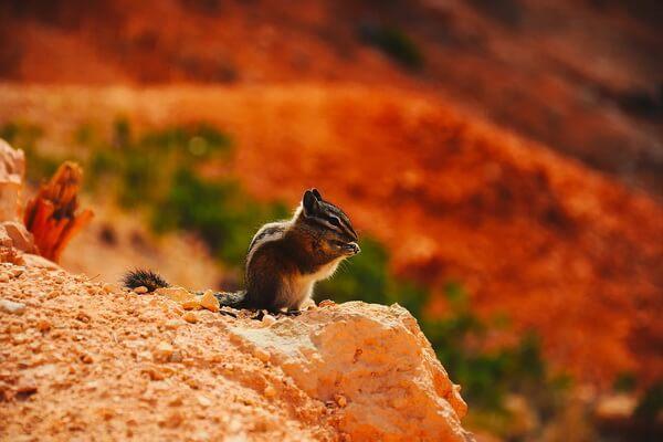 Уникальная флора и фауна национального парка Брайс-Каньон в штате Юта