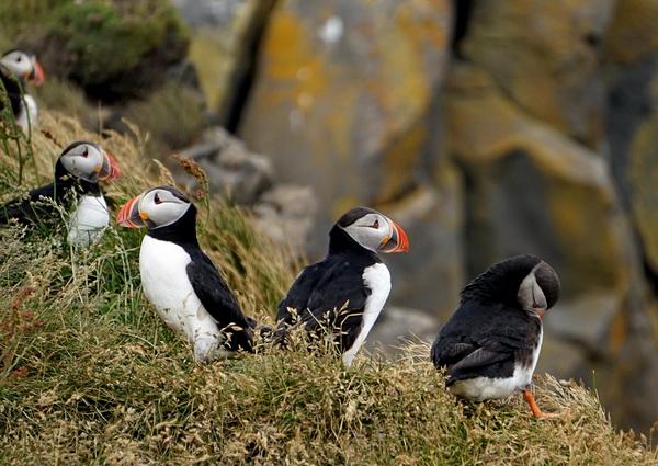 Флора и фауна Исландии