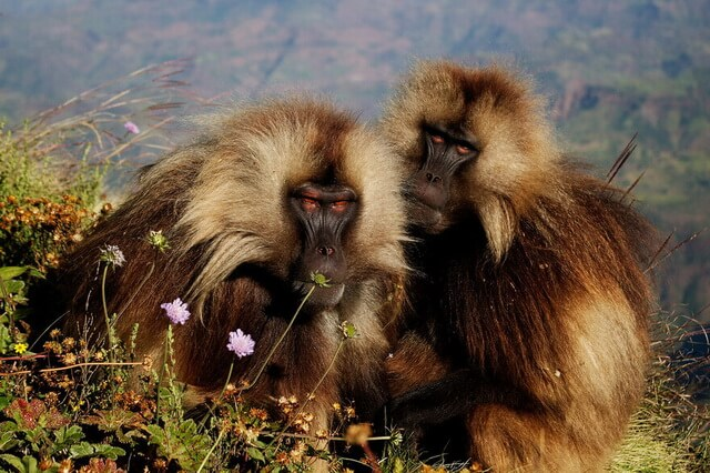 Удивительные и необычные обезьяны - фото, названия, описание видов