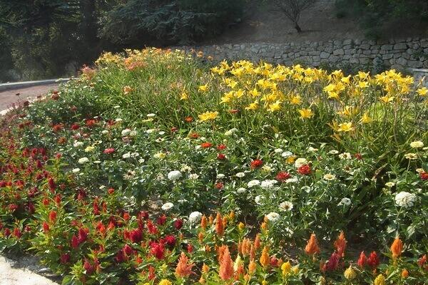 Никитский ботанический сад в посёлке Никита в Крыму