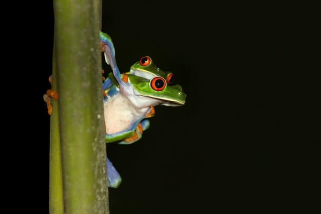 Животные, ведущие ночной образ жизни - ТОП-10 видов с фото, названиями и описанием
