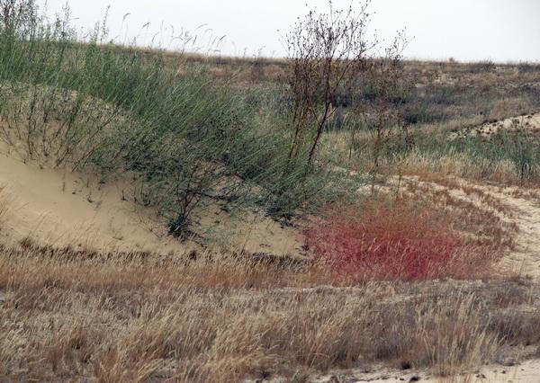 Как добраться в пустыню Олешковские пески
