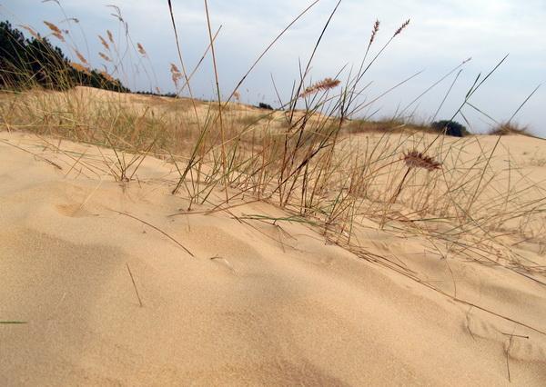 Национальный парк Олешковские пески