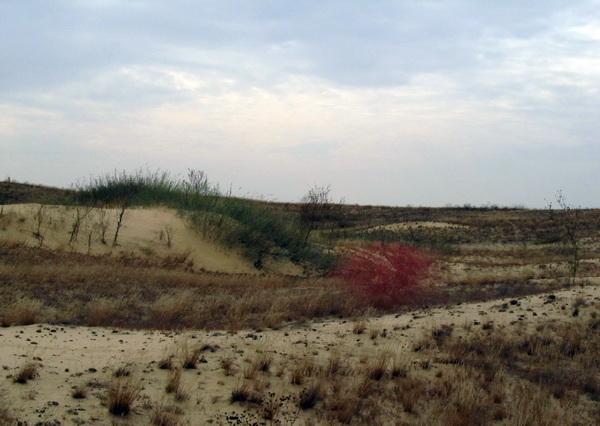 Пустыня Олешковские пески в Херсонской области