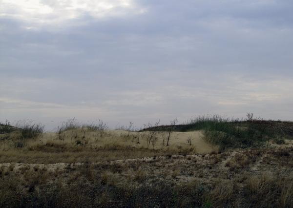 Олешковские пески на юге Украины