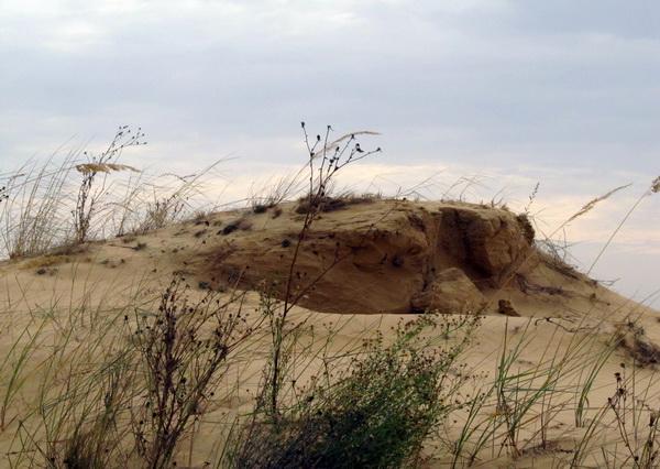 Олешковские пески вблизи Цюрупинска